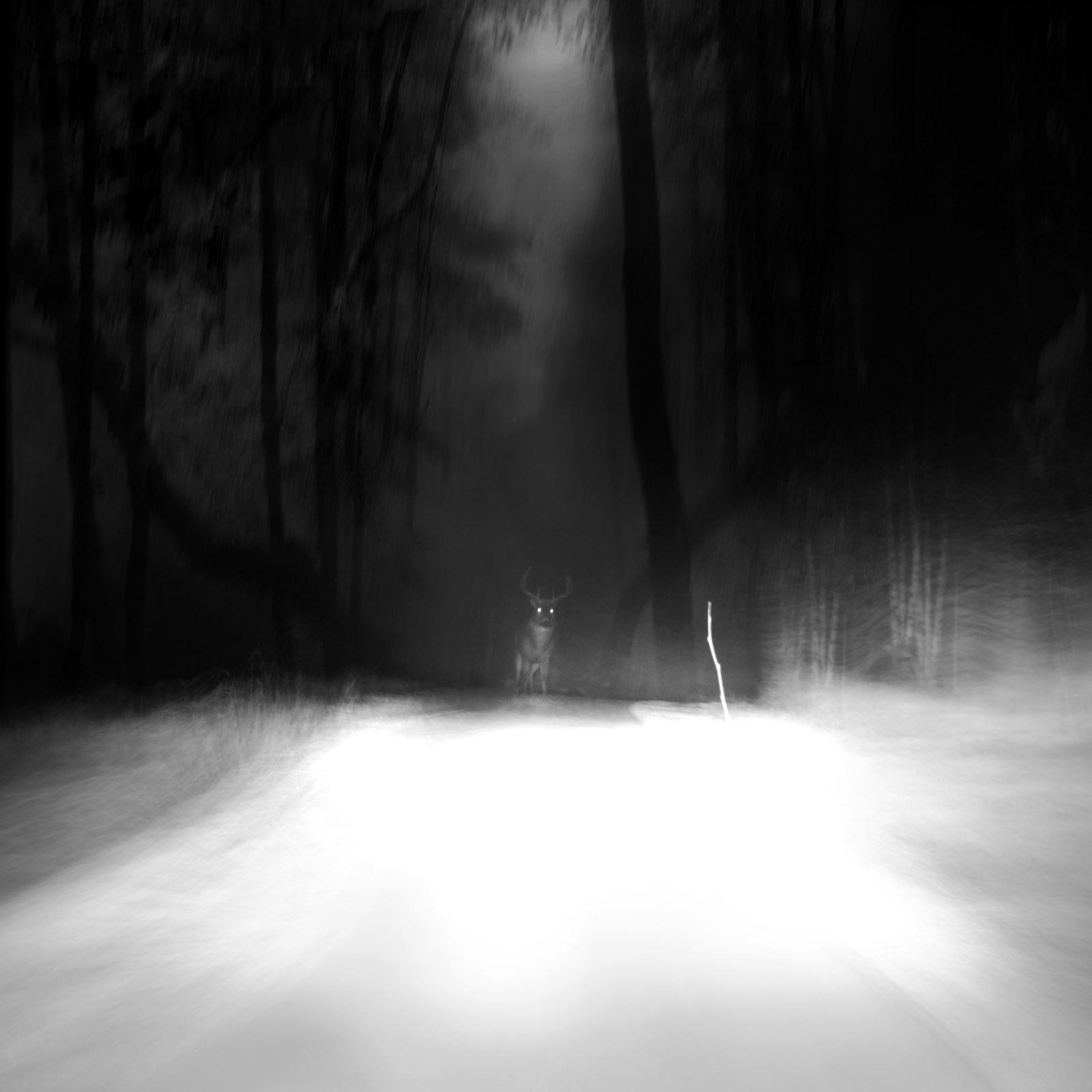 deer-in-the-headlights.jpg