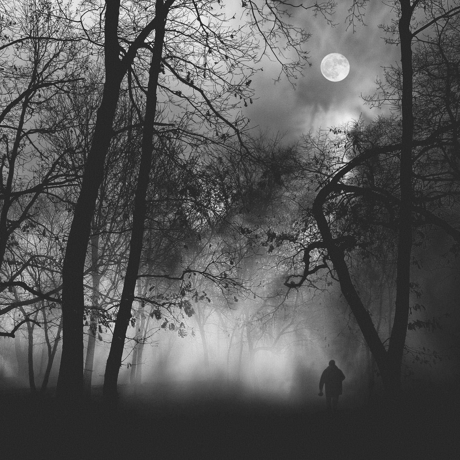 into-the-fog-3.jpg